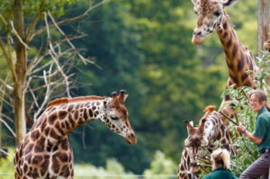 when you study in Cambridge in summer 2017 you will also visit the safari park as part of the social programme